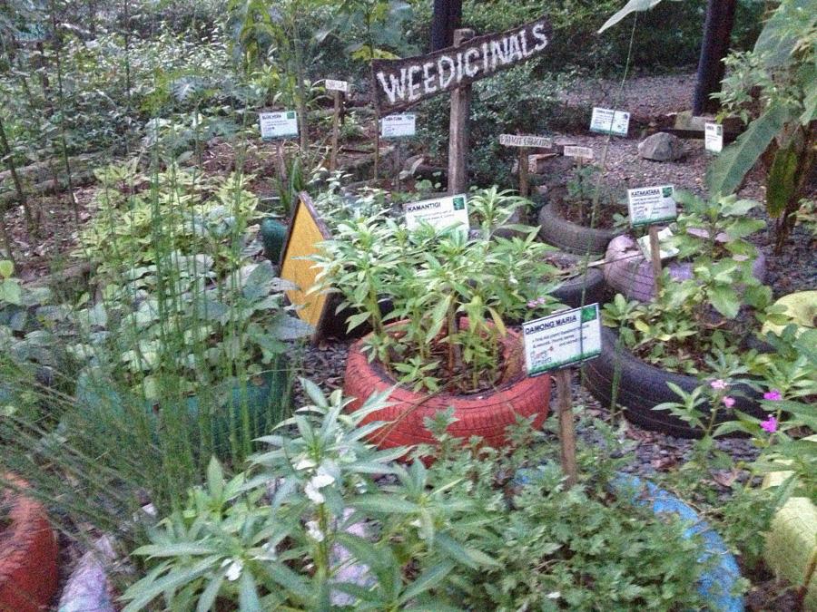 God\'s Pharmacy - Flor\'s Garden