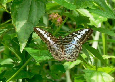 butterfly-set1
