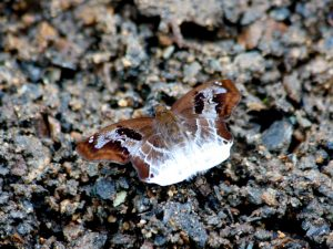 butterfly-set11