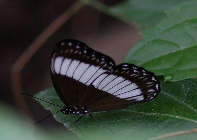 butterfly-set13