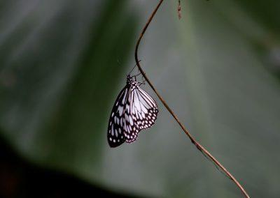 butterfly-set15