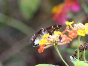 butterfly-set16