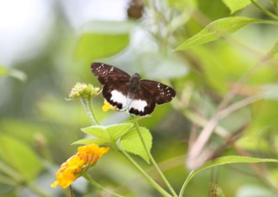 butterfly-set17