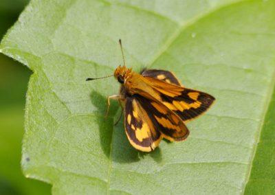 butterfly-set19