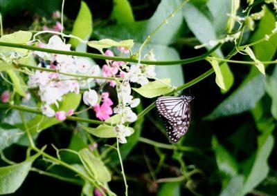 butterfly-set2