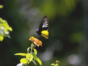 butterfly-set21