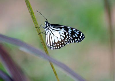 butterfly-set22
