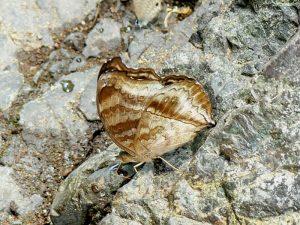butterfly-set23