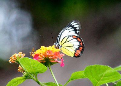 butterfly-set3