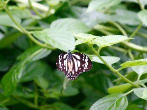 butterfly-set5