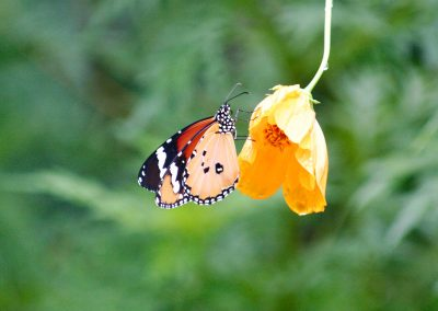 butterfly-set6