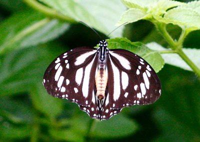 butterfly-set7