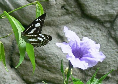butterfly-set9