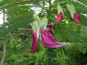 ediblel-plants1