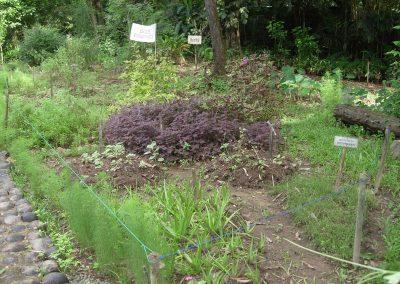 medicinal-plants1