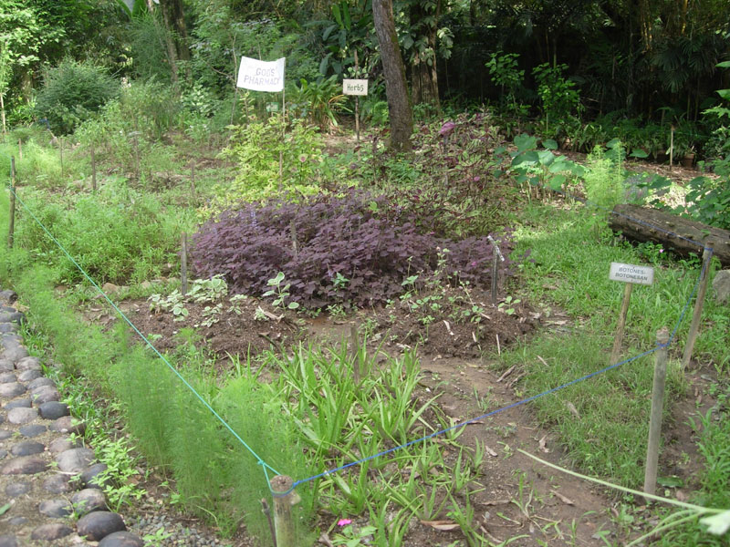 God 39 s pharmacy flor 39 s garden for God s garden pharmacy