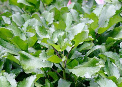 medicinal-plants2