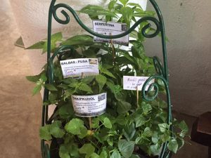 medicinal-plants3