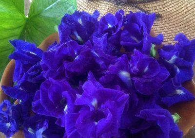 medicinal-plants5
